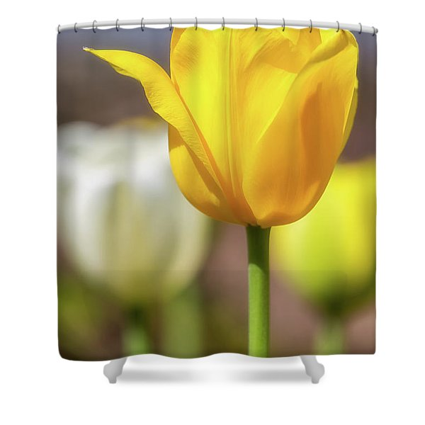 Tulip Time 29 Shower Curtain