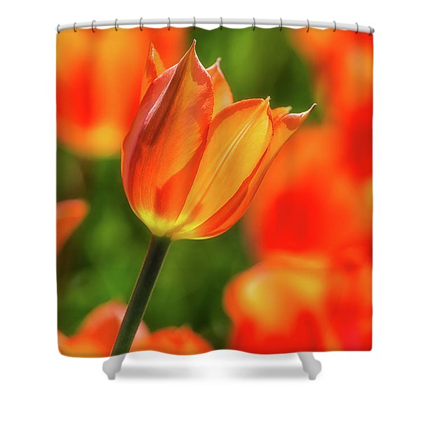 Tulip Time 33 Shower Curtain