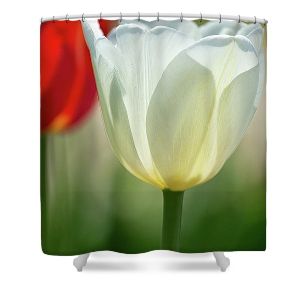 Tulip Time 37 Shower Curtain