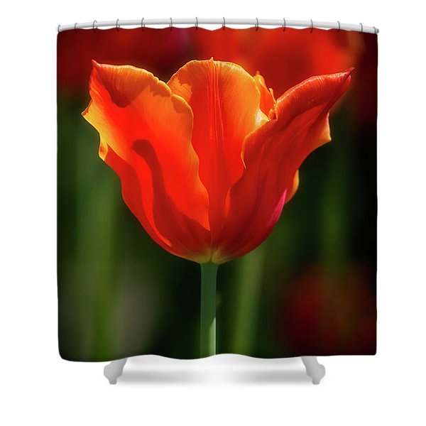 Tulip Time 38 Shower Curtain