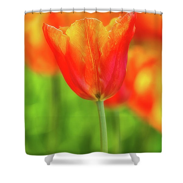 Tulip Time 41 Shower Curtain