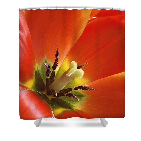 Tuliplicious Shower Curtain
