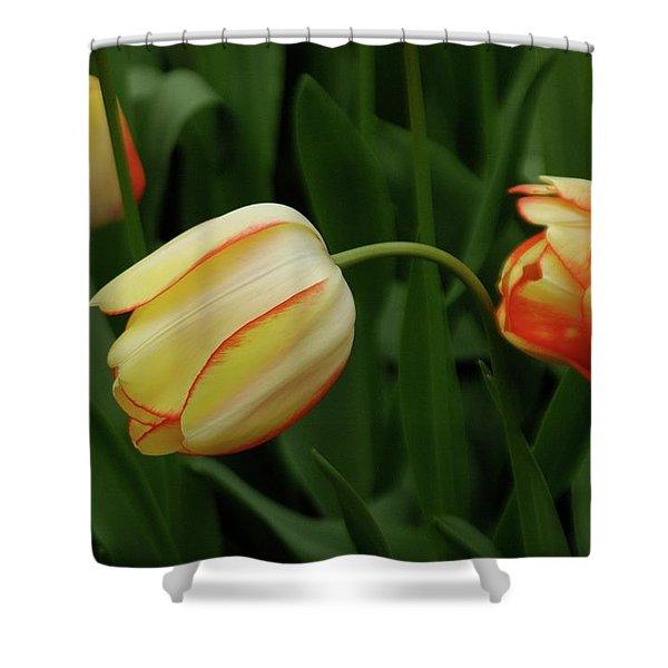 Nodding Tulips Shower Curtain