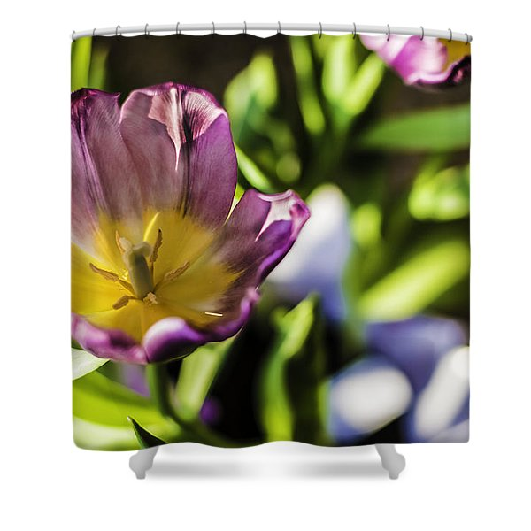 Tulips At The End Shower Curtain
