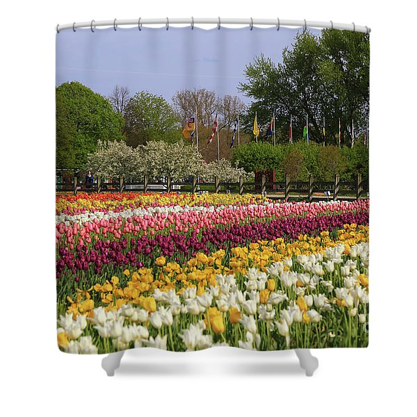 Tulips In Rows Shower Curtain