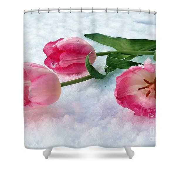 Tulips In Snow Shower Curtain