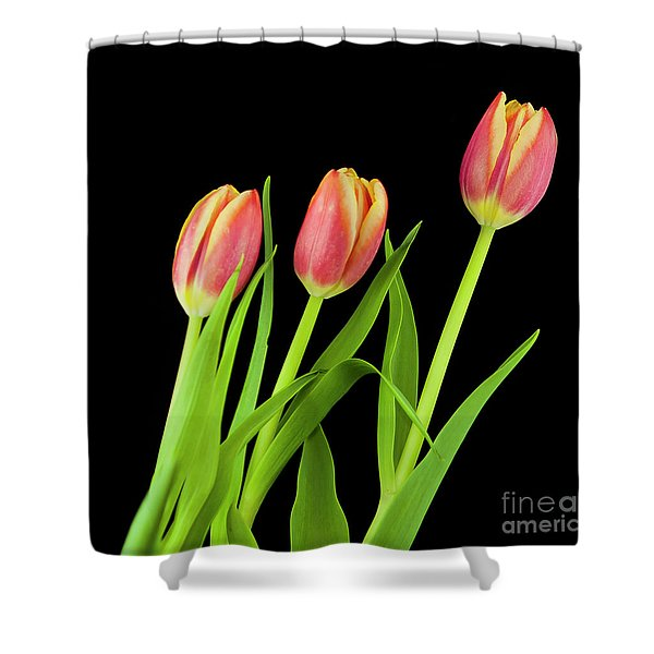 Tulips On Black Shower Curtain