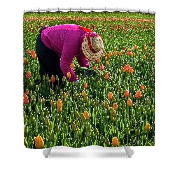 Tulips Picker Shower Curtain