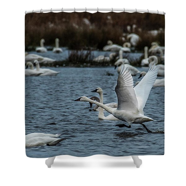 Tundra Swan And Liftoff Head Start Shower Curtain