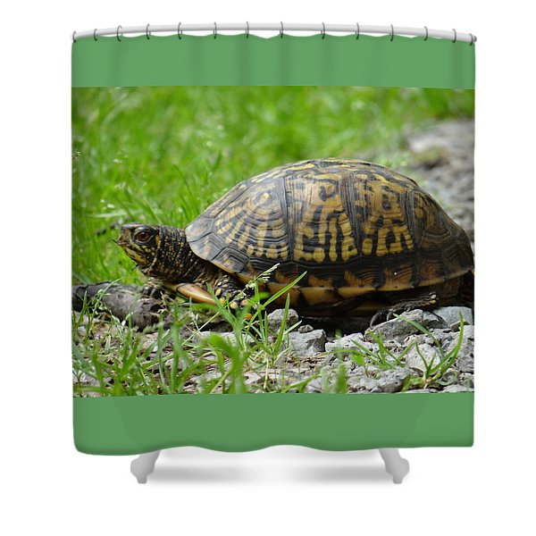 Turtle Crossing Shower Curtain