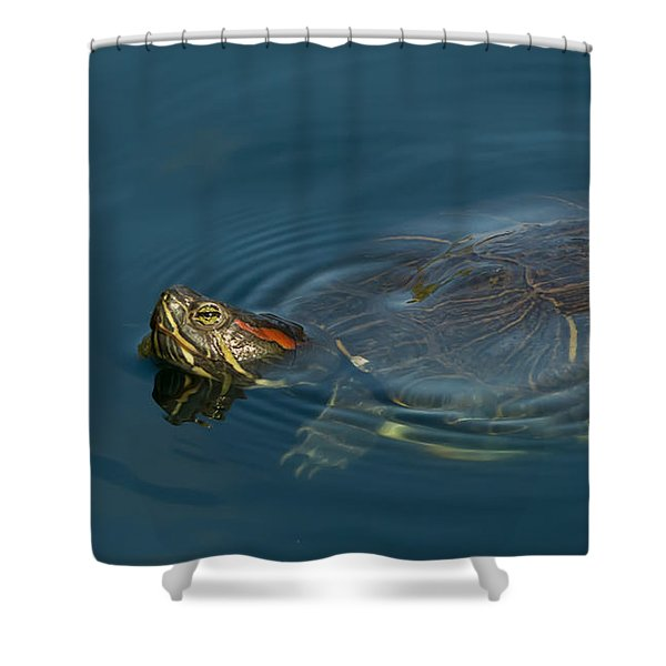 Turtle Floating In Calm Waters Shower Curtain
