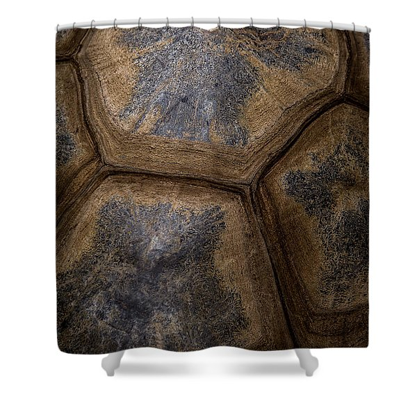 Turtle Shell Shower Curtain