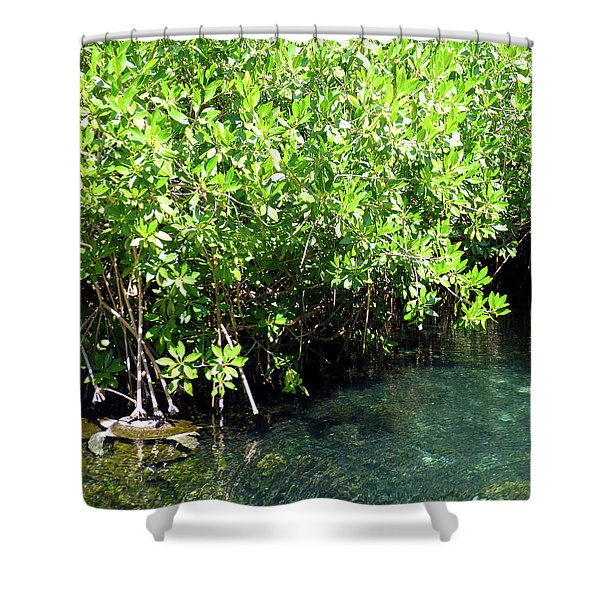 Turtle Swim Shower Curtain