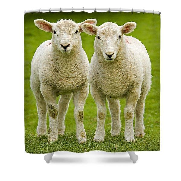 Twin Lambs Shower Curtain