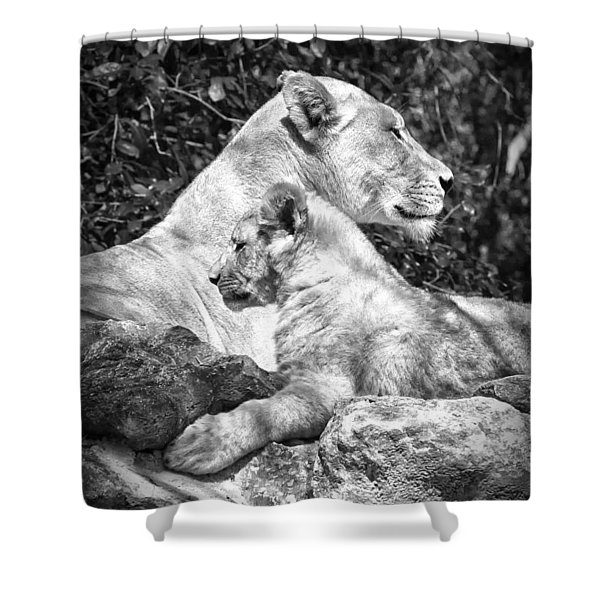 Twin Sphinx Shower Curtain