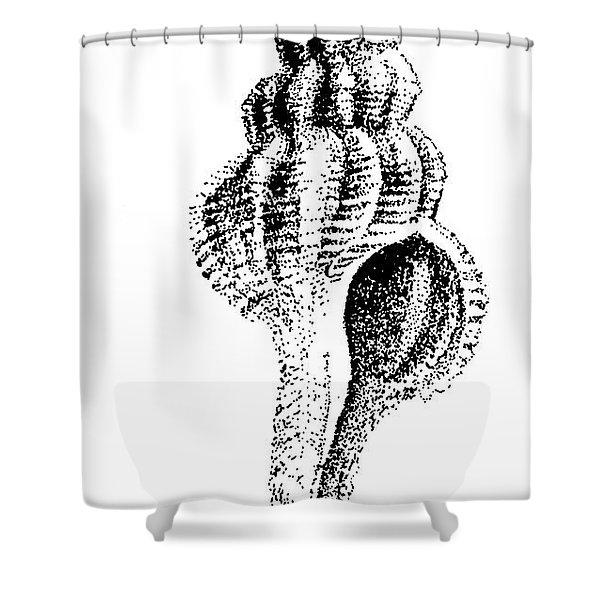 twirly Shell Shower Curtain
