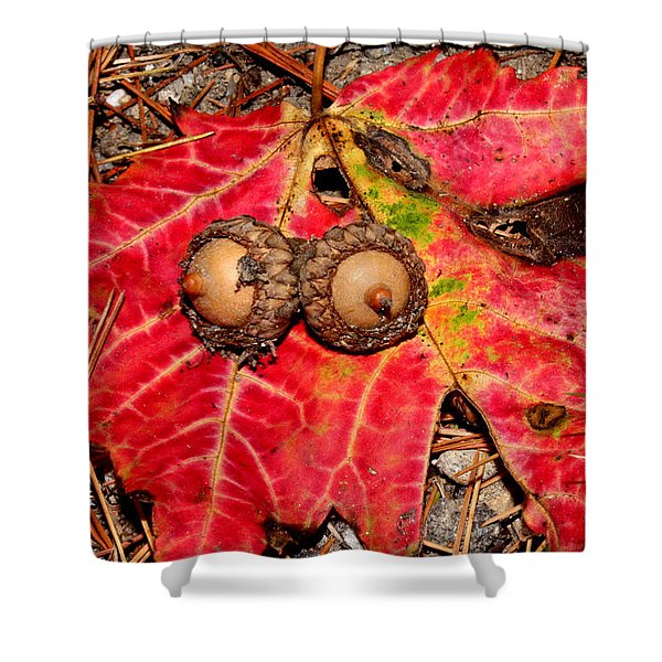 Two Acorns On Tatterd Maple Leaf Shower Curtain