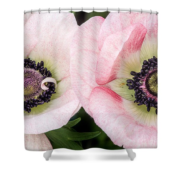 Two Anemones Shower Curtain