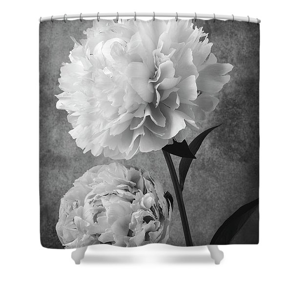 Two Beautiful Black And White Peonies Shower Curtain