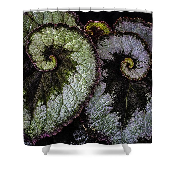 Two Begonia Leaves Shower Curtain