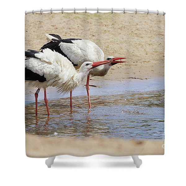 Two Drinking White Storks Shower Curtain