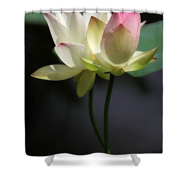 Two Lotus Flowers Shower Curtain