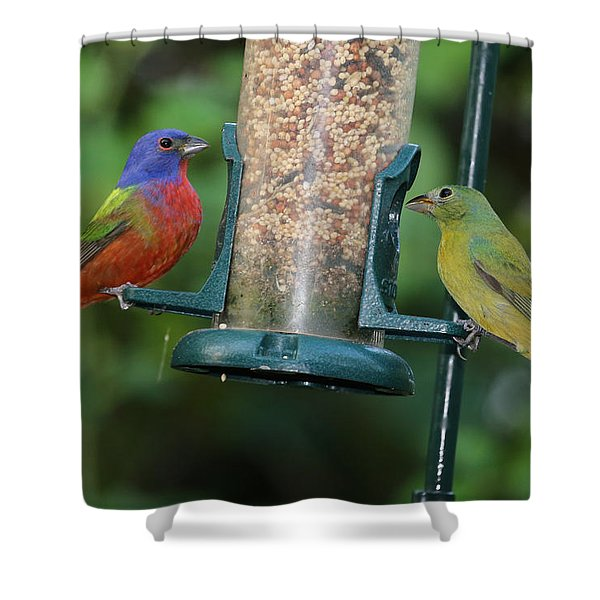 Two Painted Buntings Shower Curtain