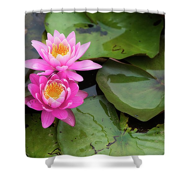 Two Pink Lilies Shower Curtain