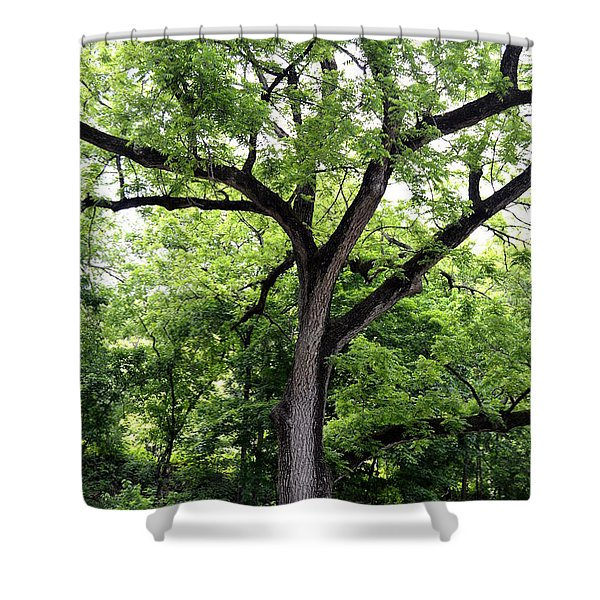 Two Tone Tree Shower Curtain