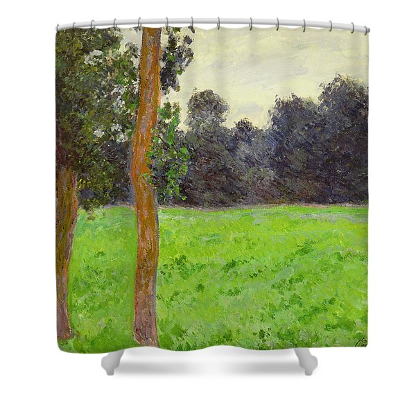 Two Trees In A Field Shower Curtain