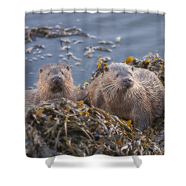 Two Young European Otters Shower Curtain