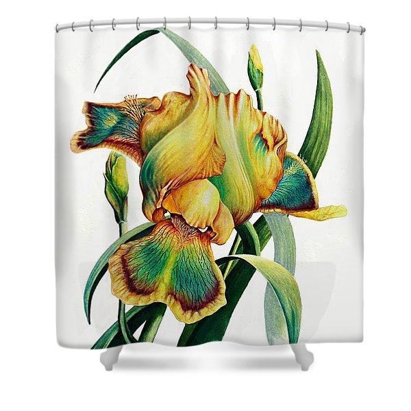 Tye Dyed Shower Curtain