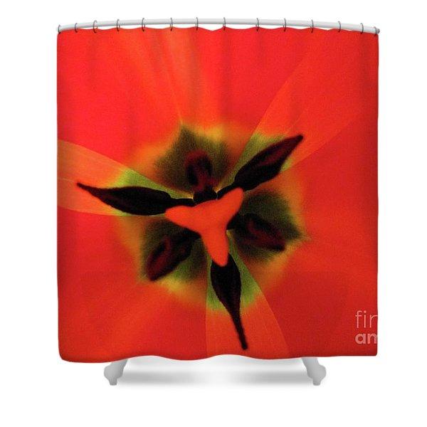 Ultimate Feminine Shower Curtain