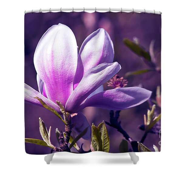 Shower Curtain featuring the photograph Ultra Violet Magnolia  by Silva Wischeropp