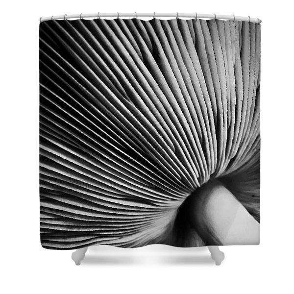 Under A Mushroom Shower Curtain