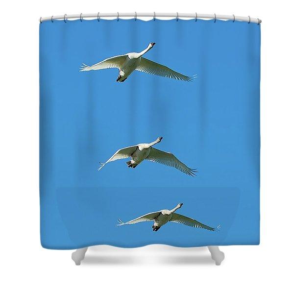 Unison Shower Curtain