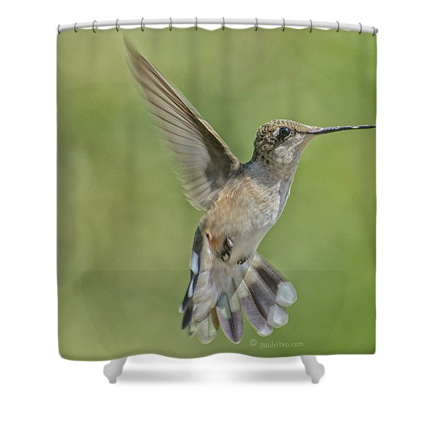 Untitled Hum_bird_four Shower Curtain