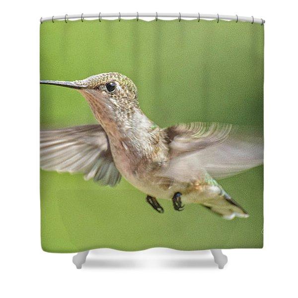 Untitled Hum_bird_three Shower Curtain