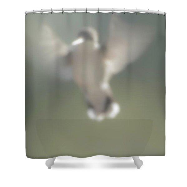 Untitled Hummingbird Shower Curtain