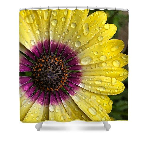 Daisy Up Close  Shower Curtain