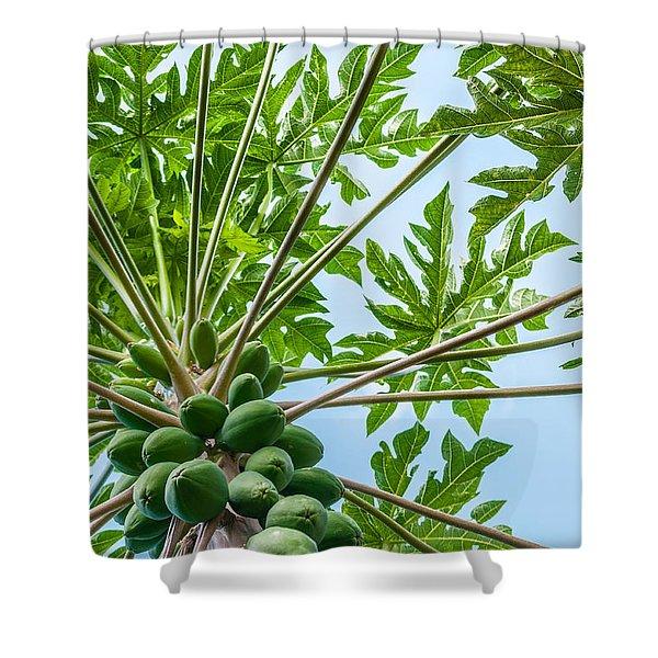 Up The Papaya Shower Curtain