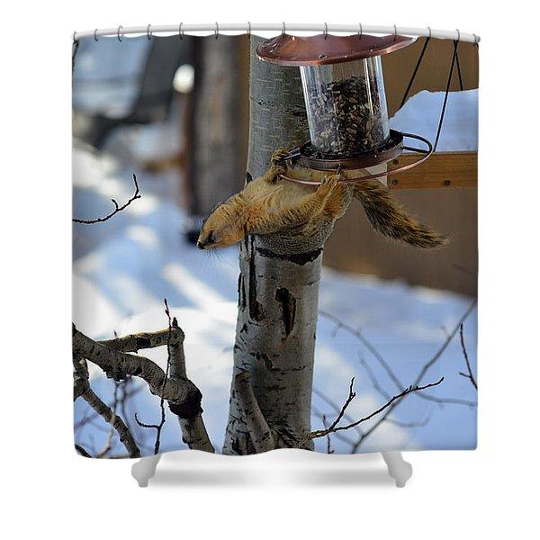 Upisde Down Squirrel Shower Curtain