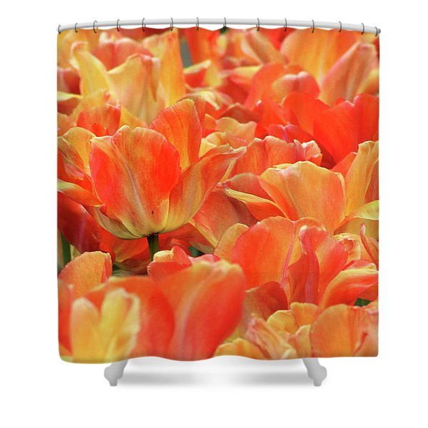 United States Capital Tulips Shower Curtain