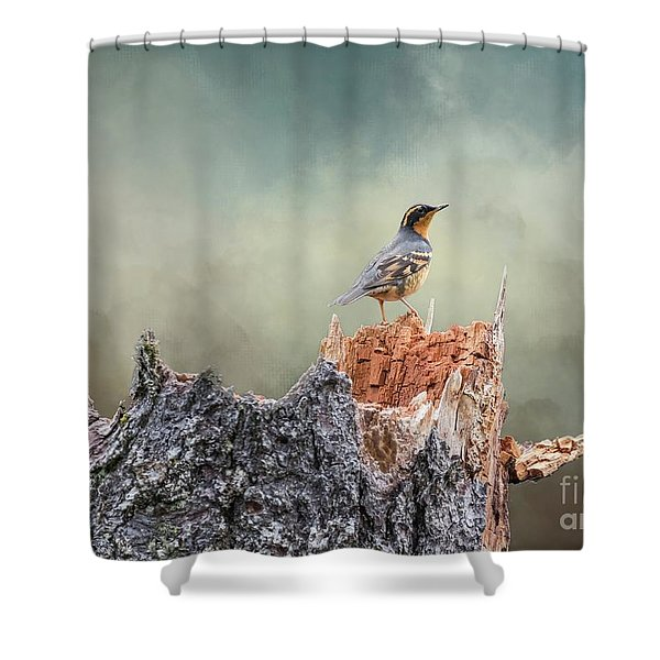 Varied Thrush On A Dead Tree Shower Curtain