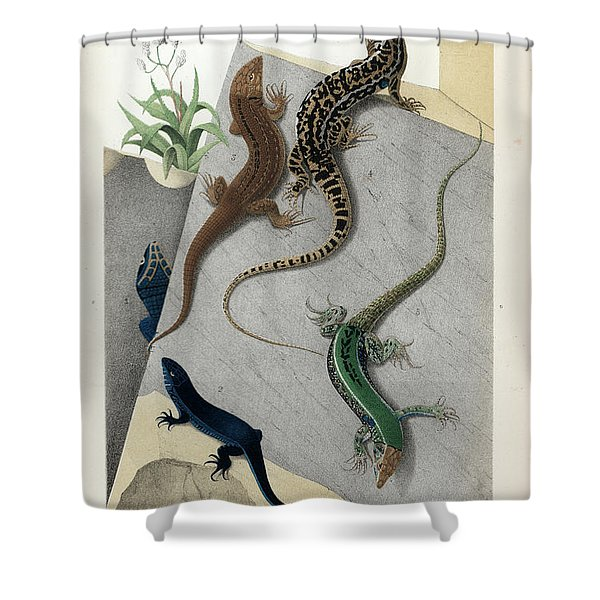 Varieties Of Wall Lizard Shower Curtain