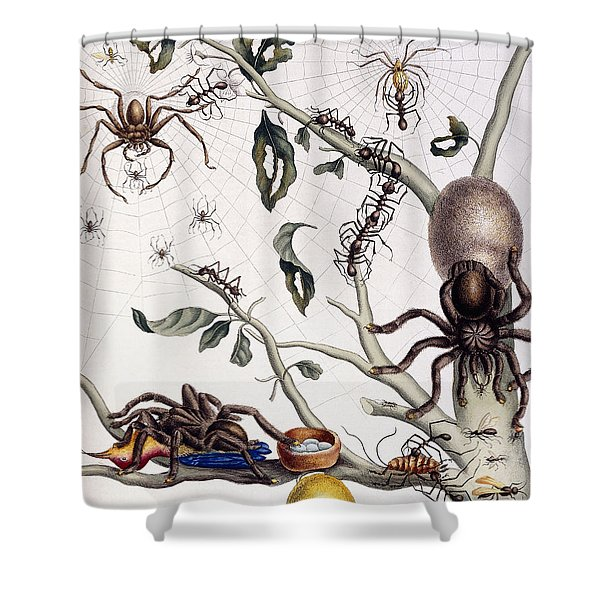 Various Arachnids From South America, 1726  Shower Curtain