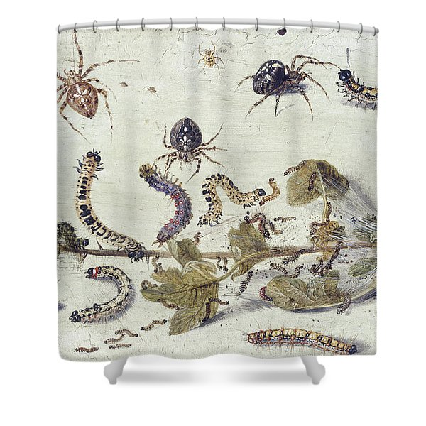 Various Spiders And Caterpillars, With A Sprig Of Gooseberry Shower Curtain