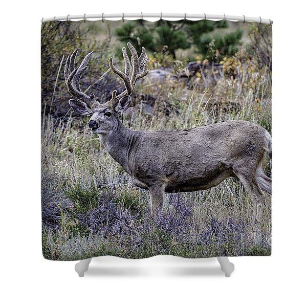 Velvet Mule  Shower Curtain