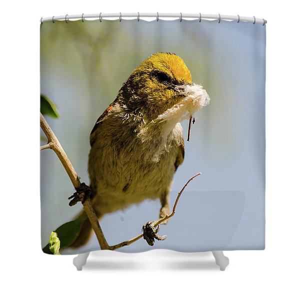 Verdin Building A Nest Shower Curtain