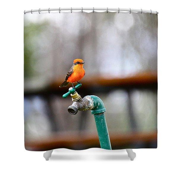Vermilion Flycatcher Two Shower Curtain